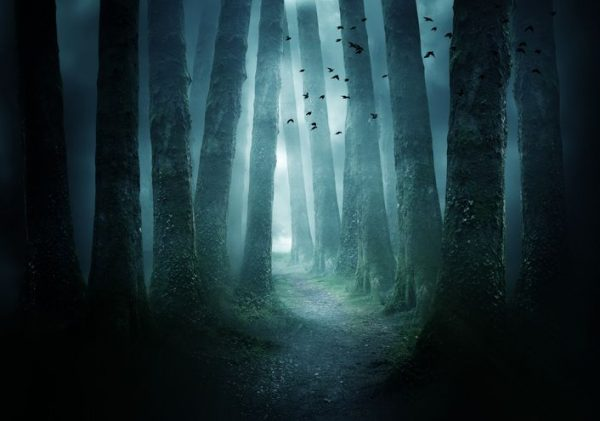 image of spooky forest